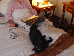 Blogging in bed July with Rocky