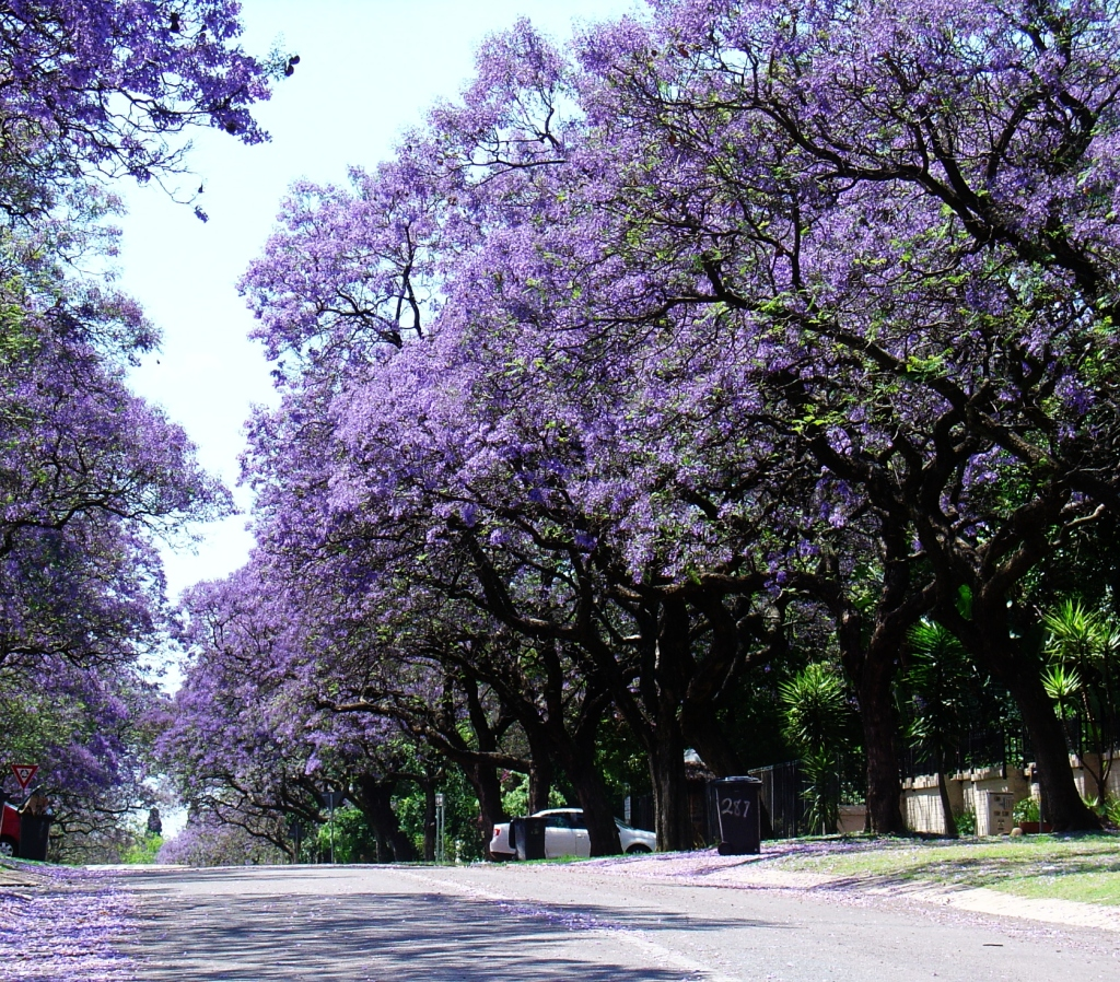 Spring in Pretoria October