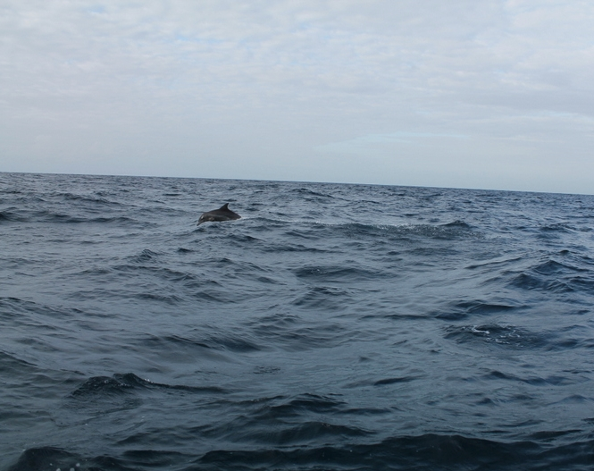 dolphin6