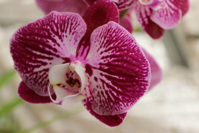 orchids 7