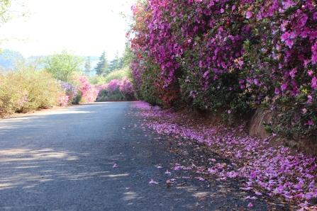 the winding driveway