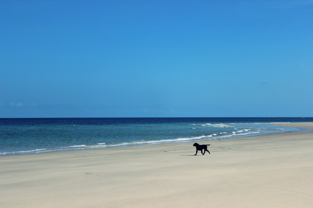 One of the dogs on the beach and loving it